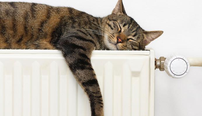 radiateur-chat